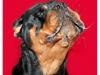 Fun-Pet-Portraits-Cleckheaton