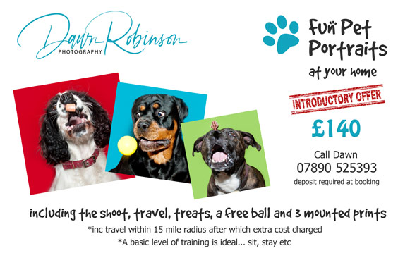 Fun Pet Portrait offer